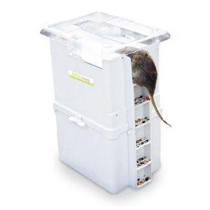 eko-1000-muizenplaag-rattenplaag
