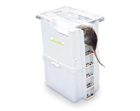 muizen bestrijden tips